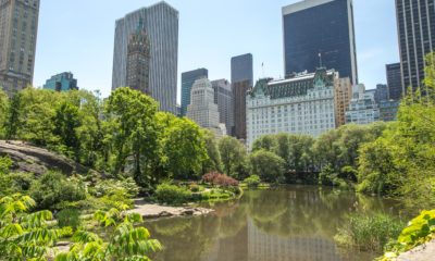 New York City Central Park pond and buildings